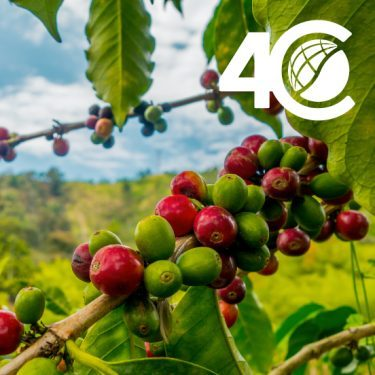 coffee fruit 4C certificated