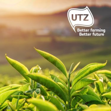 picture of green tea for UTZ